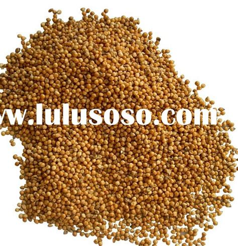 organic proso millet seed for sale organic proso millet