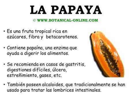 propiedades medicinales de la papaya botanica propiedades de las papayas