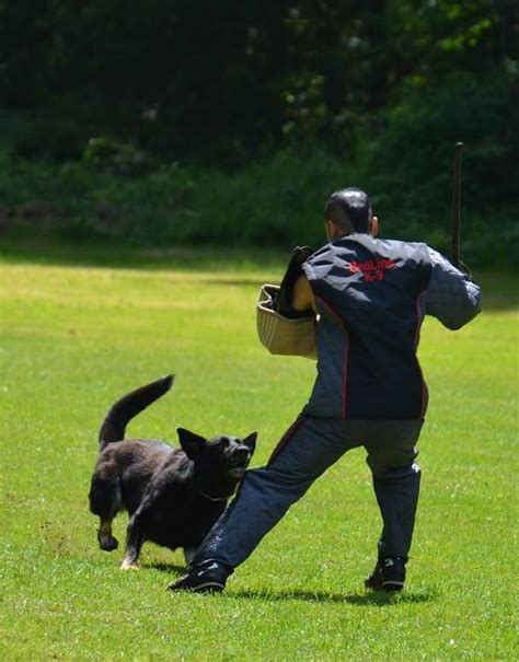 best ipo 156 best images about ipo and schutzhund on