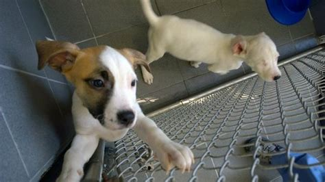 mlive puppies abandoned and six puppies healthy happy and playful at jackson county animal