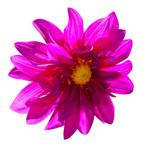 Vs Pink Flower классика против современности планета флористики интернет журнал о флористике