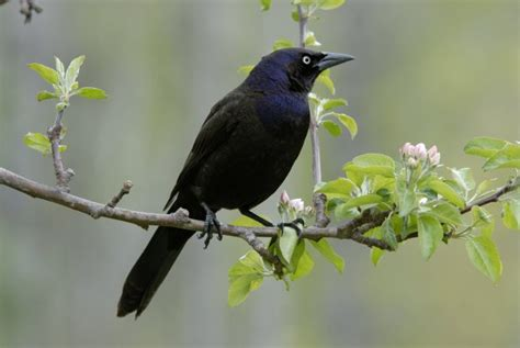 which birds that sing in the morning why do birds sing in the morning metro news