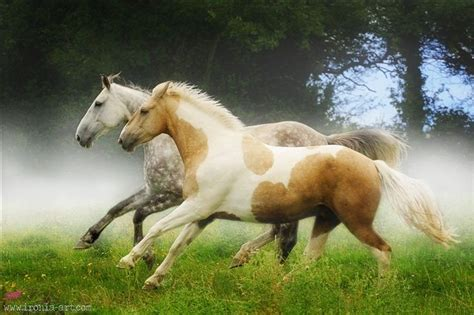 1000 images about horses palomino paint on