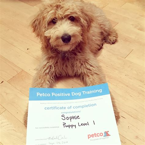 how much are classes at petco petco the best 2017