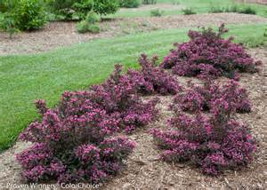 Books On Container Gardening - images for spilled wine 174 weigela florida proven winners