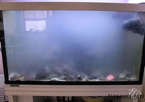 10 gallon fish tank is cloudy 10 gallon tank why is my fish tank cloudy and how can i fix