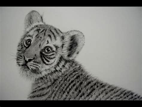 animales a lapiz youtube como dibujar un tigre beb 201 sombrear pelo de animal
