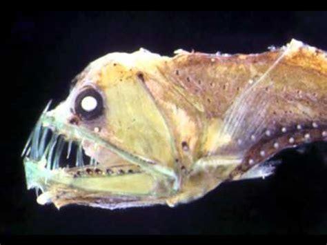St Rani impressionante di animali strani e anfibi fatti