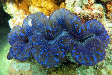 Molluscs - Mollusca - Animalia