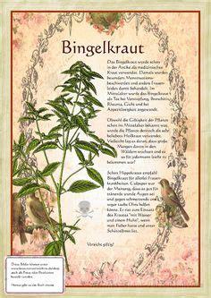 heilkräuter aus dem garten gottes 1000 bilder zu gew 252 rze kr 228 uter heilpflanzen herbs