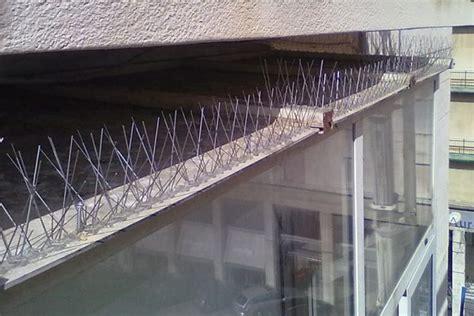 come scacciare i piccioni dal terrazzo come allontanare i piccioni dal tetto definitivamente