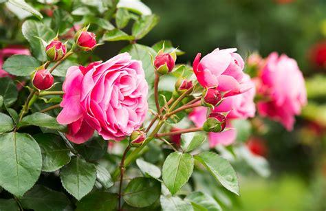 Duftende Garten Pflanzen by Duftende Und Bl 252 Hende F 252 R Ihren Garten Der Kleine