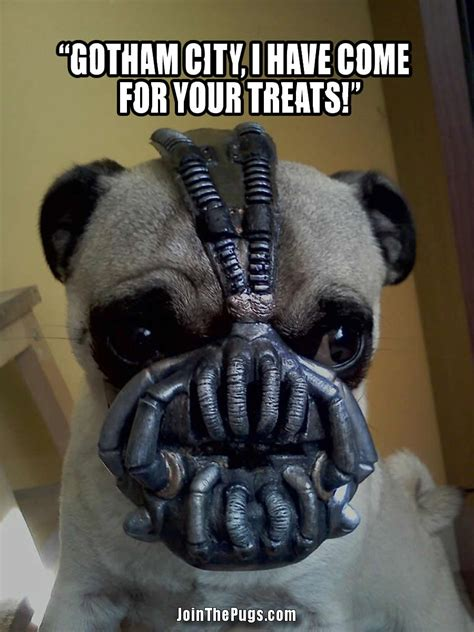 and the pug join the pugs gt bane the pug