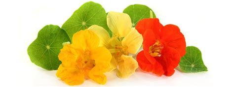 fiori commestibili fiori commestibili da coltivare in vaso cose di casa