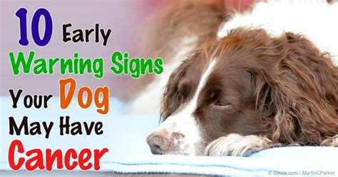 cancer in dogs skin cancer kills pets images