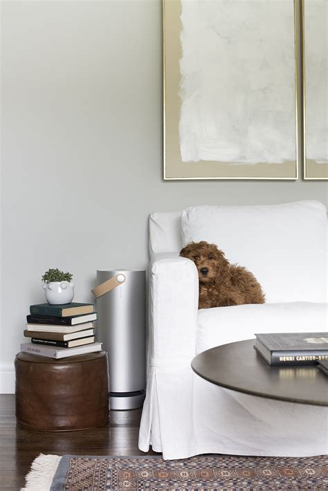 molekule air purifier  pet friendly living room room