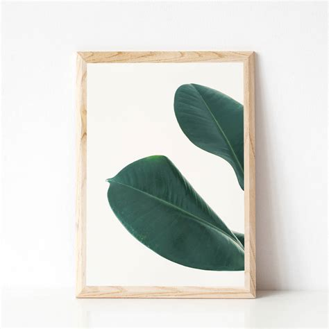 rubber st print rubber fig leaves i photographic print by cassia beck