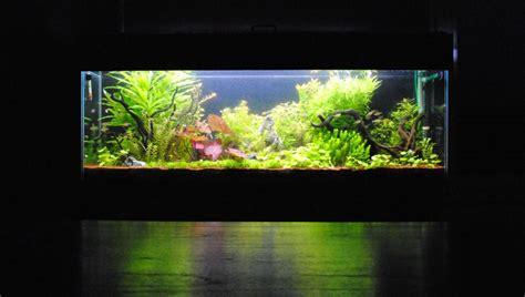 Lu Pl Aquascape 330l