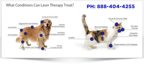 canine laser therapy for arthritis canine feline uses medx laser therapy equipment