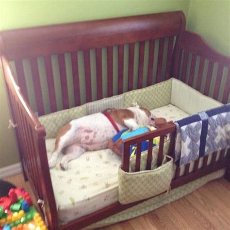 Turning A Crib Into A Toddler Bed Ethan Krause We Can Turn Charlies Crib Into A Bed For Breezway And Someone Make Us