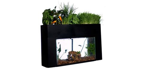 Fish Tank Vegetable Garden How To Grow A Vegetable Garden That S Fertilized By Your