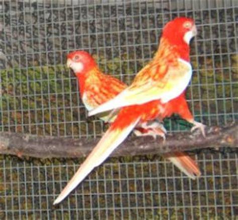 Jual Burung Macaw Kaskus parkit kaskus the largest community