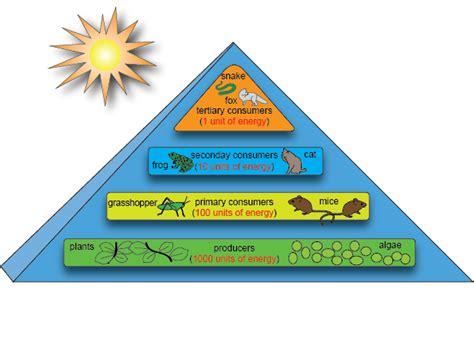 cadenas alimentarias piramides ecologicas flujo de energ 237 a niveles tr 243 ficos paperblog