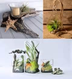 Very Small Desk 11 Cool Ideas To Create Air Plant Zen Garden Design Swan