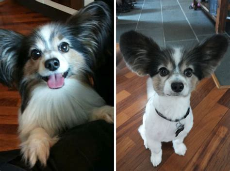 before and after haircuts for dogs share pictures of your dogs before and after their