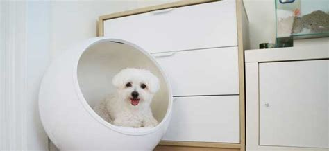 temperature controlled dog house the coolest or warmest pet house you ve ever seen