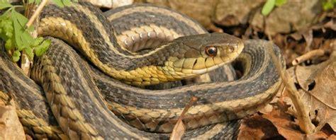 types of garden snakes wildlife local environment team