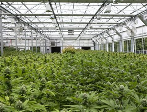 light dep greenhouse for sale conley s greenhouse manufacturing cannabis ventures