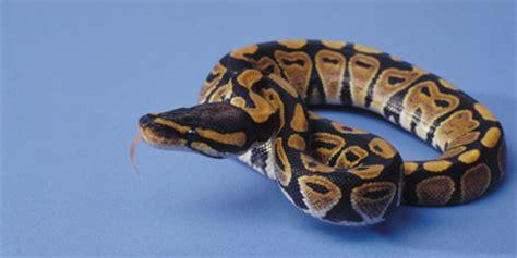 snake bites python for pentesters snakes and snake bites