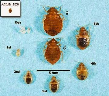 bed bugs seattle seattle pest control news bed bugs a little more active
