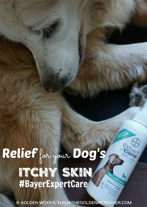 relief for dogs relief for your s itchy skin bayerexpertcare golden woofs