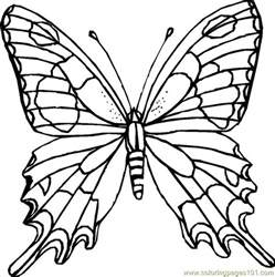 butterfly coloring pages pdf coloring pages butterfly coloring page insects