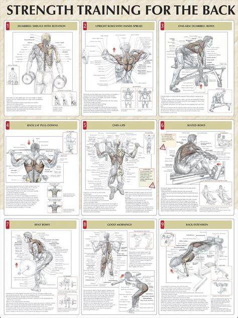 6 trainers favorite exercises for back workouts 187 health and fitness training