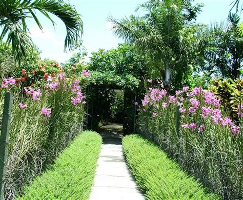 backyard plant ideas backyard orchid plant designs backyard design ideas