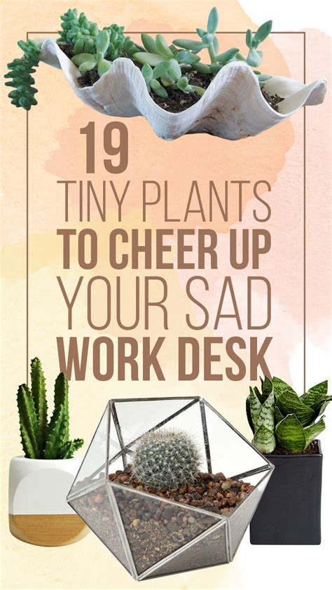 Small Plants For Office Desk 19 Tiny Plants To Cheer Up Your Sad Work Desk