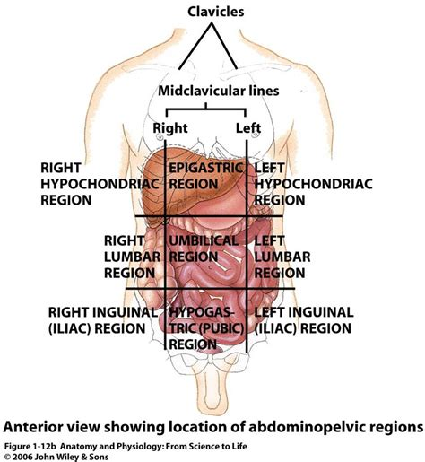 abdominal sections diagrams bms 191 bioscience