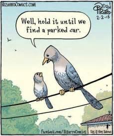 Bird Shit Meme - funny bird cartoons dump a day