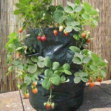 Planterbag 20 Liter Hijau planter bag tomato print 15 liter bibitbunga