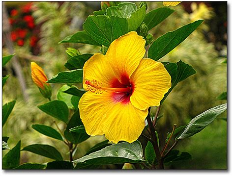 Hawaii Property Records By Name Hawaiian Flowers Names Flowers Names Hawaiian Flowers Names Gold Flowers For Hair