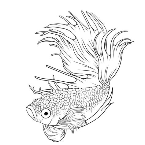 coloring pages betta fish betta coloring pages you need to enable javascript