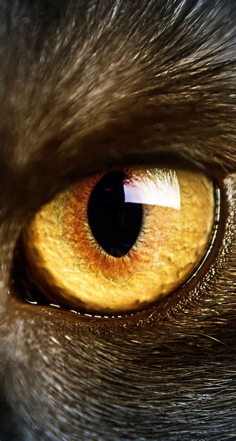 black cat yellow eyes macro  iphone wallpapers