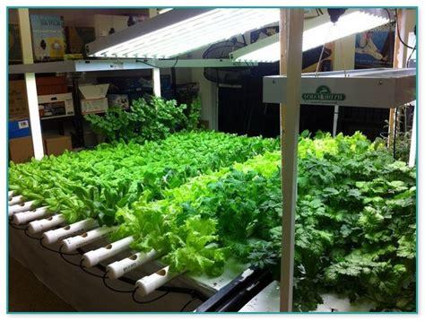 indoor vegetable gardening supplies home improvement