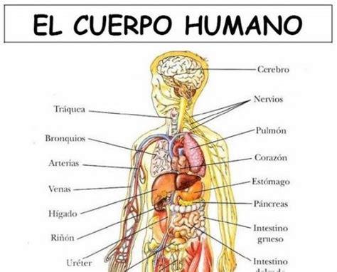 el cuerpo humano 848016977x laminas cuerpo humano vocabulario spanish and learn spanish