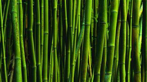 Bamboo Wallpaper HD   WallpaperSafari