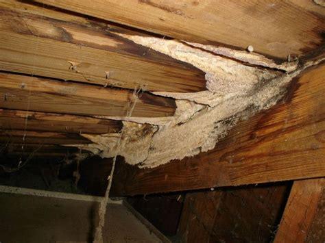 muffa nel materasso consigli e rimedi per combattere la muffa nelle in legno