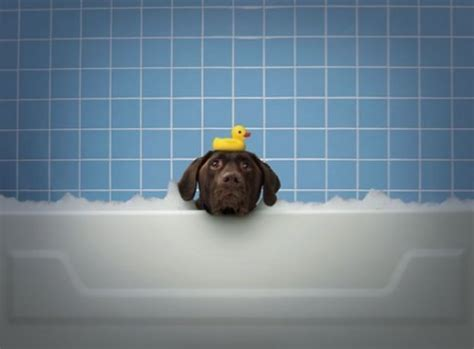 how to give puppy a bath how to give your a bath petklipscom breeds picture